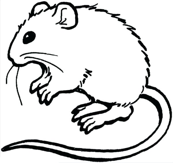 600x565 rat coloring pages learn about mouse and rat coloring pages rat