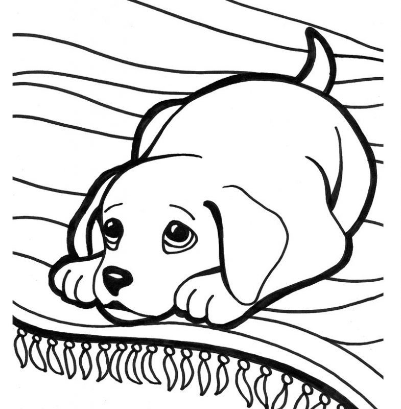 785x800 Golden Retriever Puppy Drawing At Getdrawingsm Free For Science
