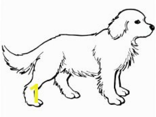 640x480 Yellow Lab Puppy Coloring Pages Lovely How To Draw A Lab Hundreds