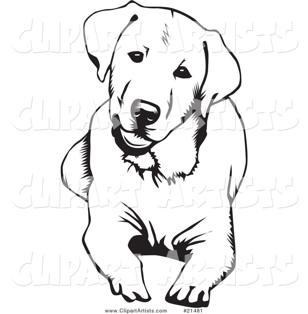 1024x1044 labrador sketch drawing and sketching dog stencil, labrador