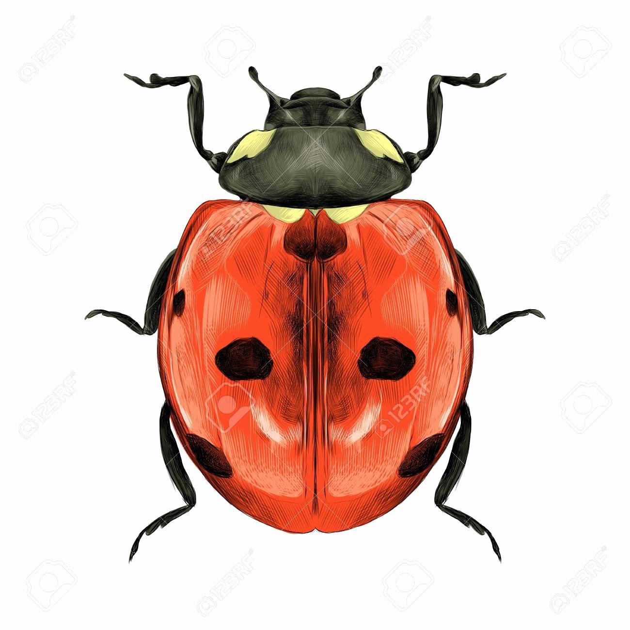 1300x1300 ladybug sketch fresh ladybug sketch miraculous ladybug