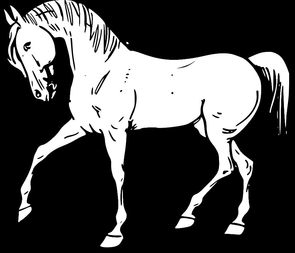 Land Animals Drawing
