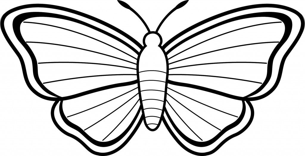 1024x524 Moth Drawing Colour For Free Download