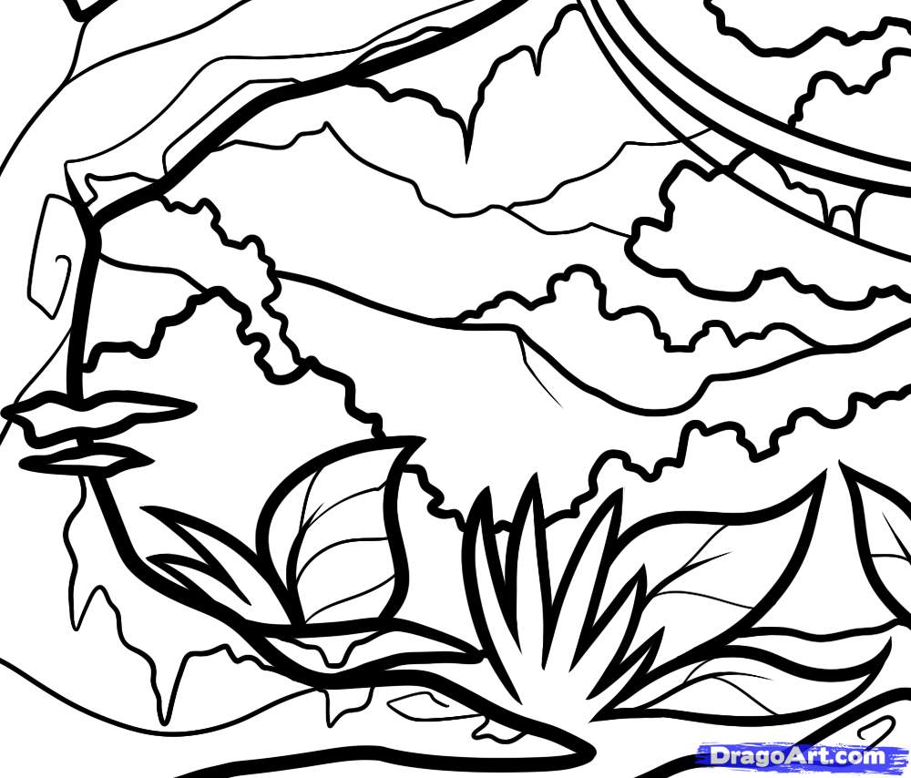 1000x854 How To Draw A Jungle For Kids, Step