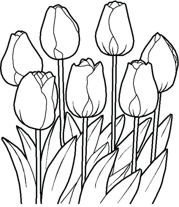 600x693 Coloring Print Out Pages Of Flowers Printable Flower Pictures
