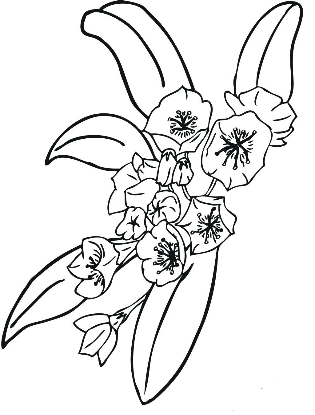 1024x1347 Small Flowers Line Drawing