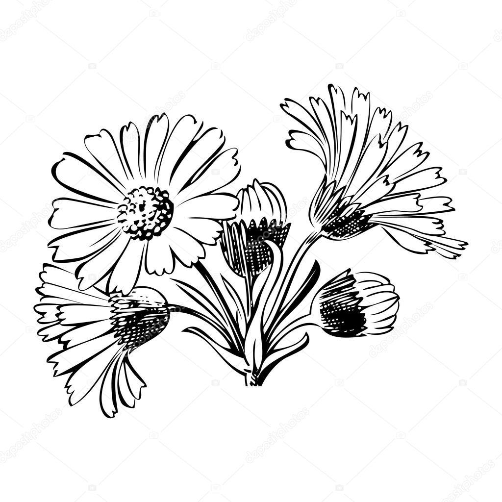 Lavender Bouquet Drawing