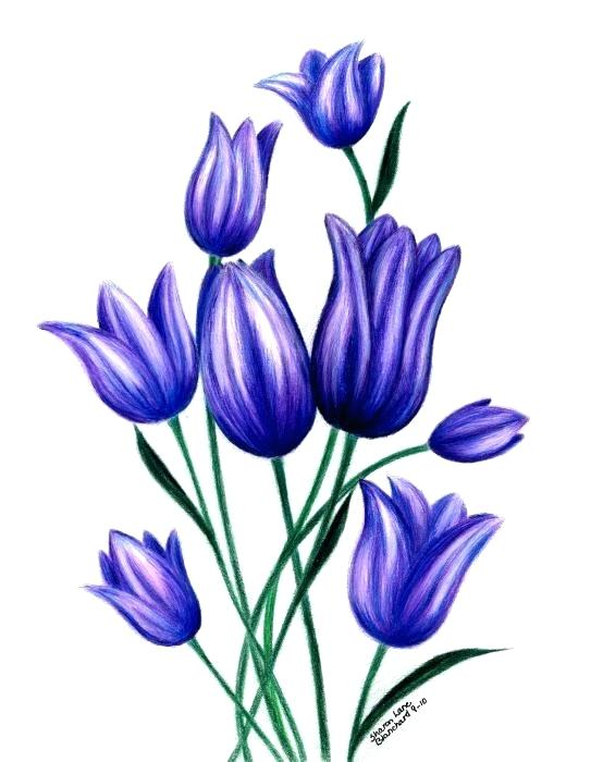 554x700 drawings of tulips tulip tulip drawing draw tulips