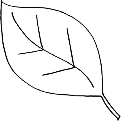 400x402 Drawing Leaf Gallery Drawing Leaves In Illustrator