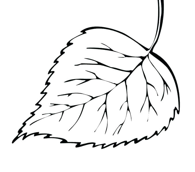 graphic about Leaf Printable identified as Leaf Drawing Template Cost-free down load easiest Leaf Drawing