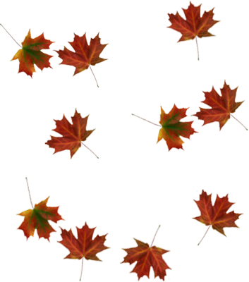 353x400 Fall Clipart Tumblr Collection