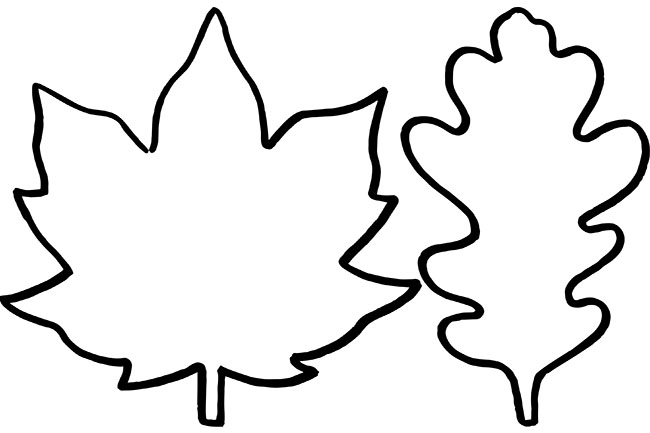650x433 Huge Collection Of 'leaf Drawing Outline' Download More Than