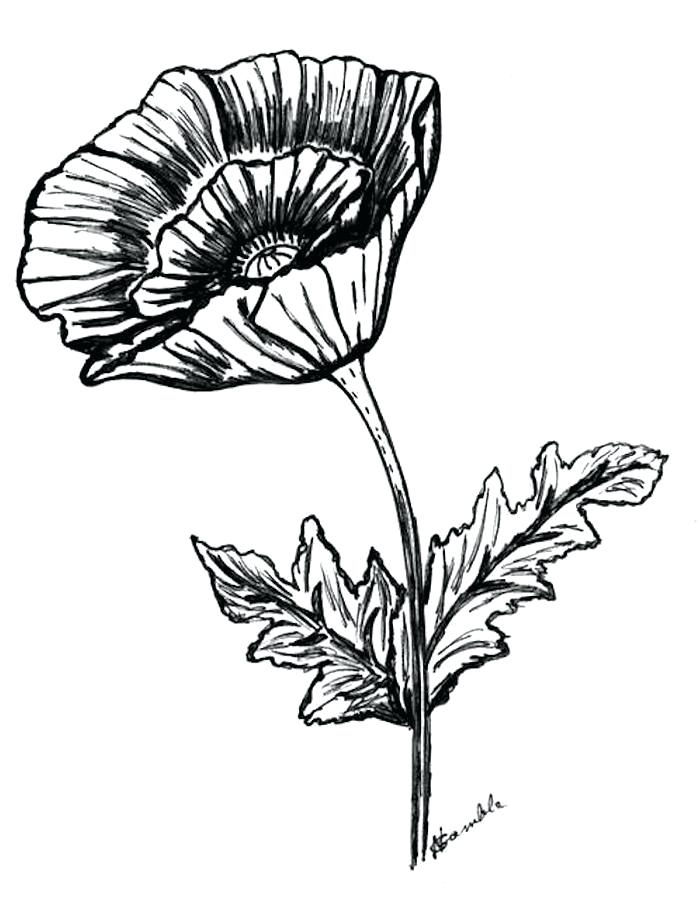 700x900 Poppy Drawings Background With Poppies Poppy Drawings Tattoos
