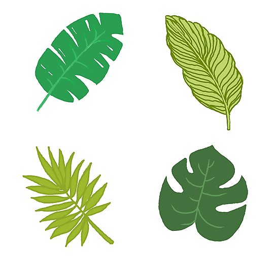550x550 Tropical Leaf Tumblr Drawing Photographic Print
