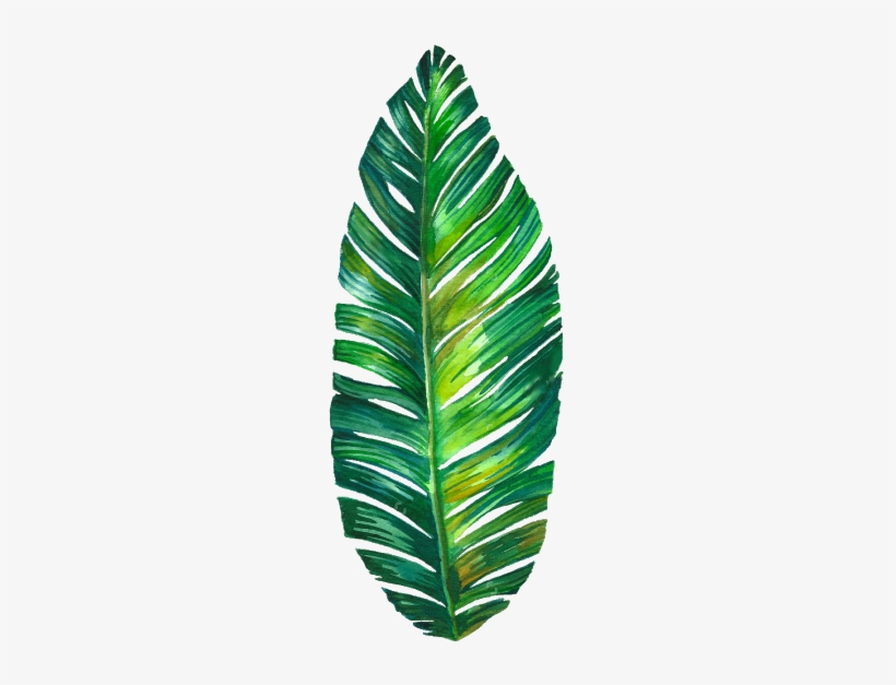 820x627 Tumblr Palmleaf Leaf Watercolor Freetoedit