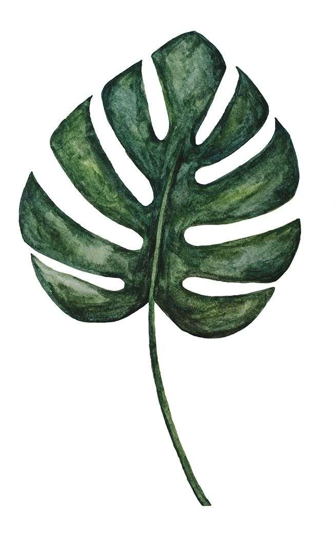653x1061 Watercolor Monstera Leaf Illustration Hojas Tropicales