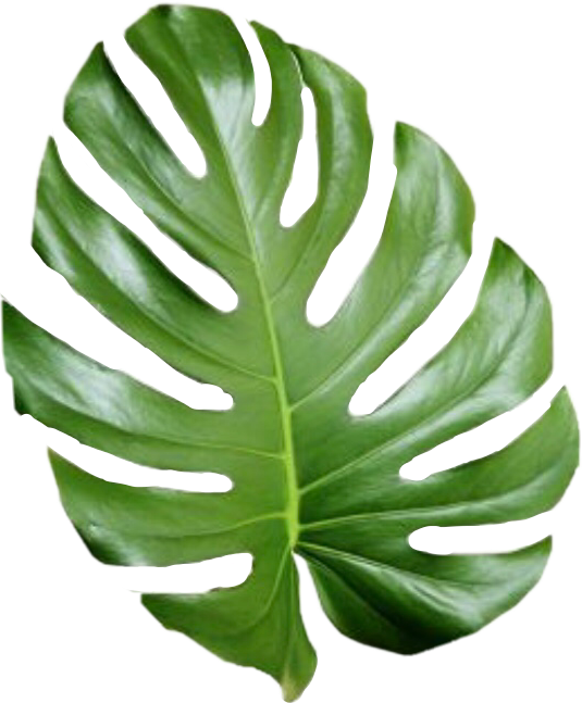 535x647 Tropical Leaf Palmtree Palmleaf Aesthetic Tumblr Cute