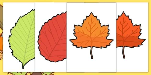 630x315 Autunm Leaf Autumn Leaves Vector Set Organic Objects Objects
