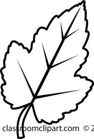 185x272 Image Result For Leaf Line Art Amy Scarf Black, White Leaves