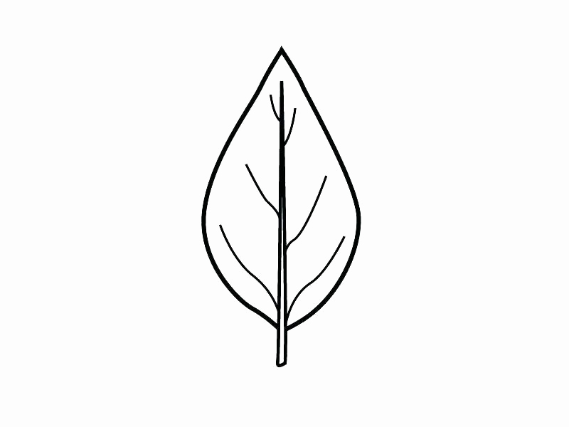 800x600 Leaf Template With Lines Fresh Leaf Line Drawing Clipart Best