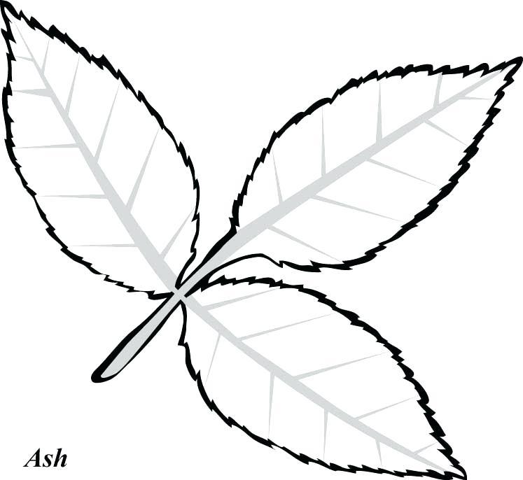 747x686 Drawing Of Leaf