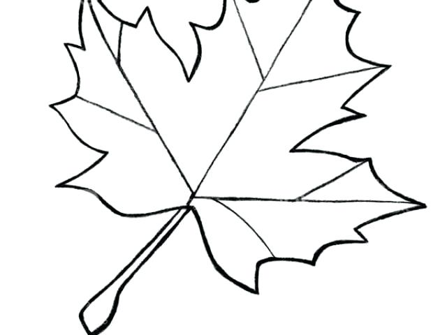 640x480 Outline Of A Maple Leaf Image Outline Of Maple Leaf Tattoo