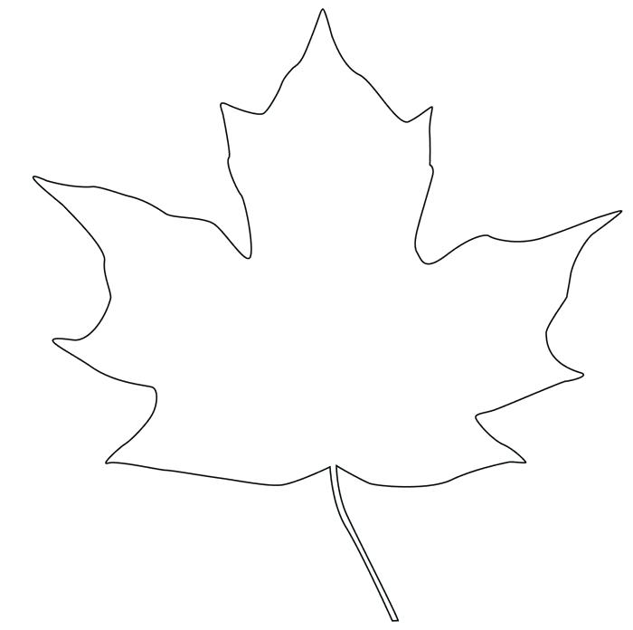 700x696 Outline Of A Maple Leaf Maple Leaf Drawing Gallery Outline Maple