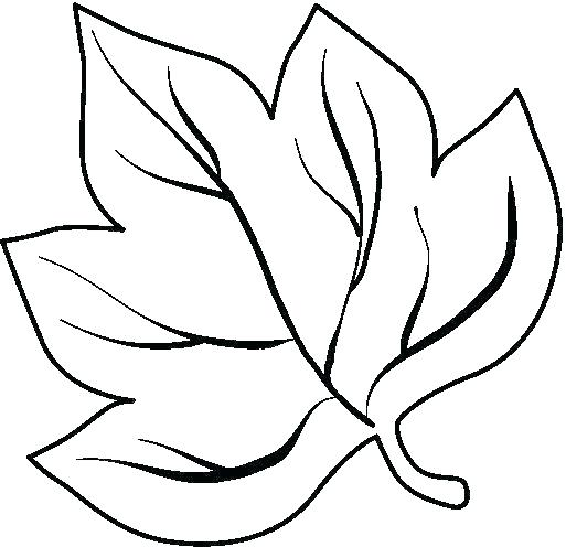 513x496 outlines of leaves outlines of leaves outlines of leaves to print