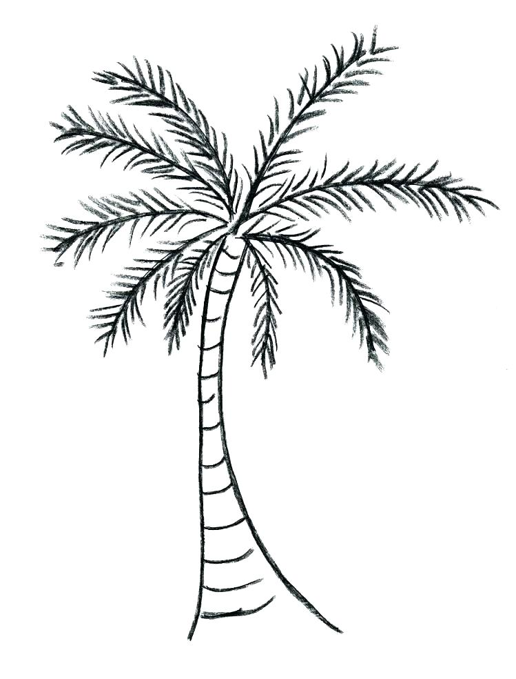 749x984 Palm Leaf Outline Super Cool Palm Leaves Coloring Pages Leaf