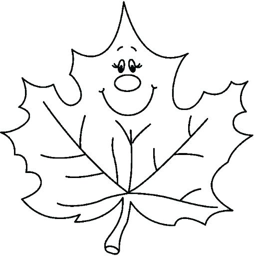 509x512 Outline Of Leaves