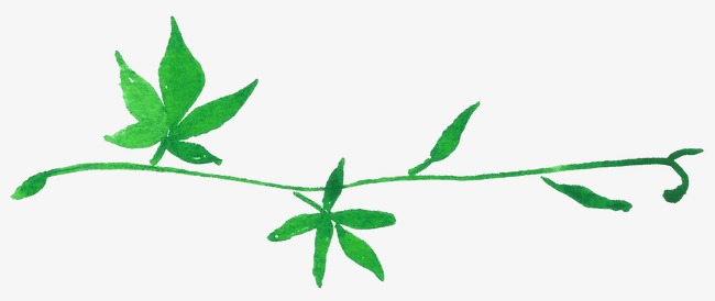 650x274 Green Vine Leaves, Vine Clipart, Drawing Plant, Greenery Png Image
