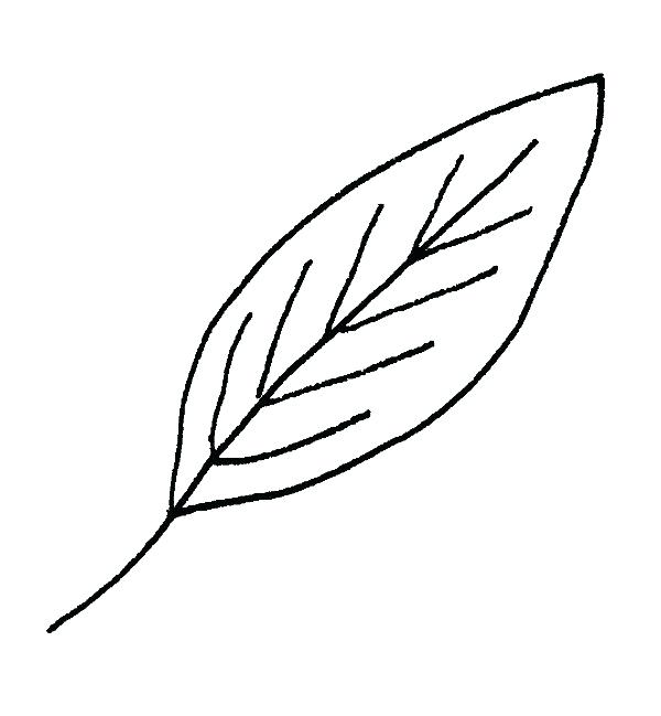 600x649 How To Draw Fall Leaves Leaf Drawing How To Draw Fall Leaves