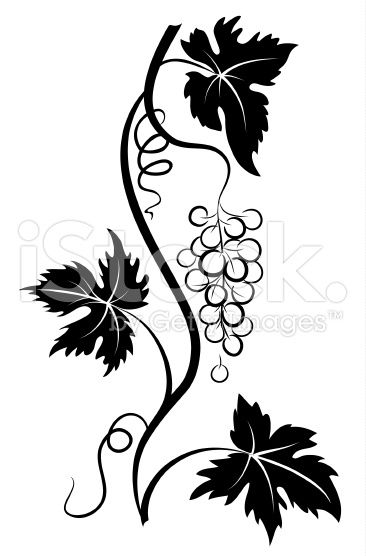 366x556 Decorative Stylized Pen And Ink Style Grapevine With Grape Bunch