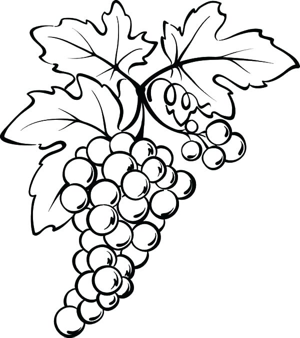 600x677 Drawing Of Grapes Leaf Drawing Grapes Easy