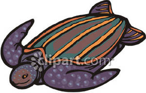 300x192 Clipart Of Leatherback Turtles