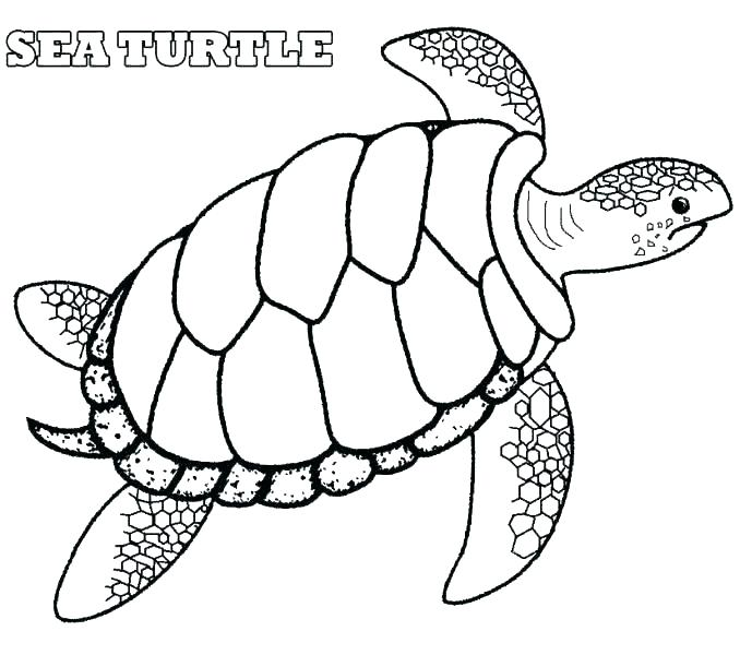 678x600 Coloring Pages Sea Turtle Coloring