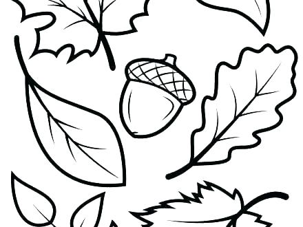 440x330 Coloring Leaf Leaf Drawing Template Coloring Pages Leaves Autumn