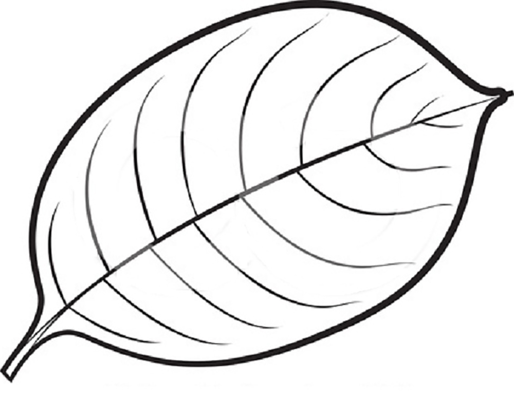 1000x783 Leaf Drawing Colouring For Free Download