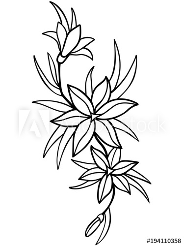 375x500 Lilies, Flowers With Leaves Line Drawing For Coloring