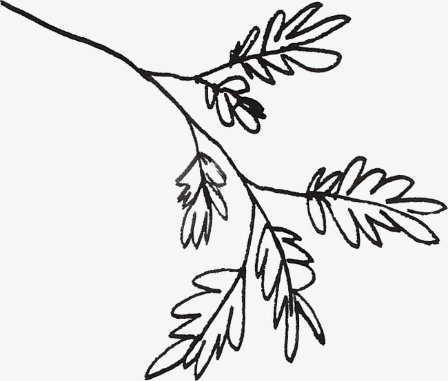 650x553 line drawing leaves, line clipart, black, line png image