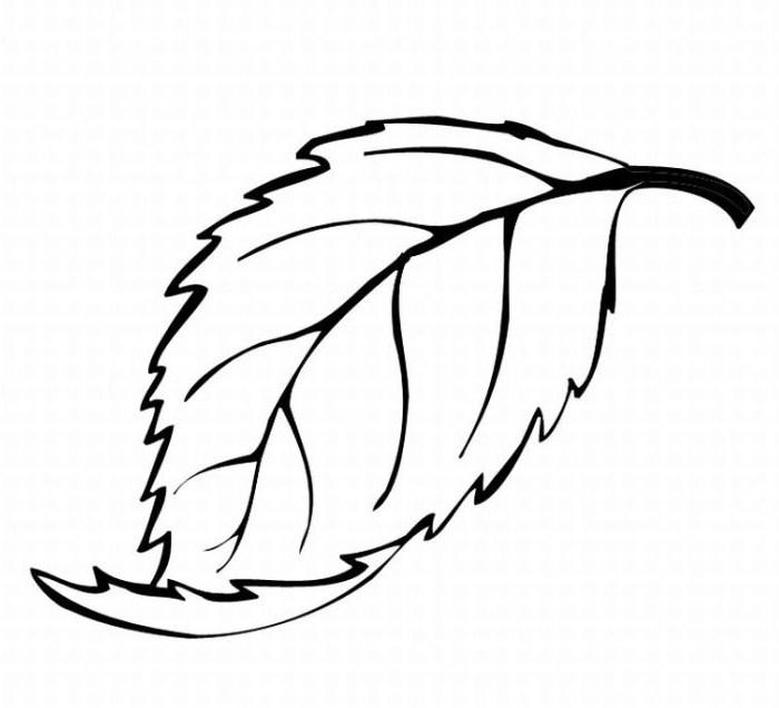 700x636 Oak Drawing Pin Leaves