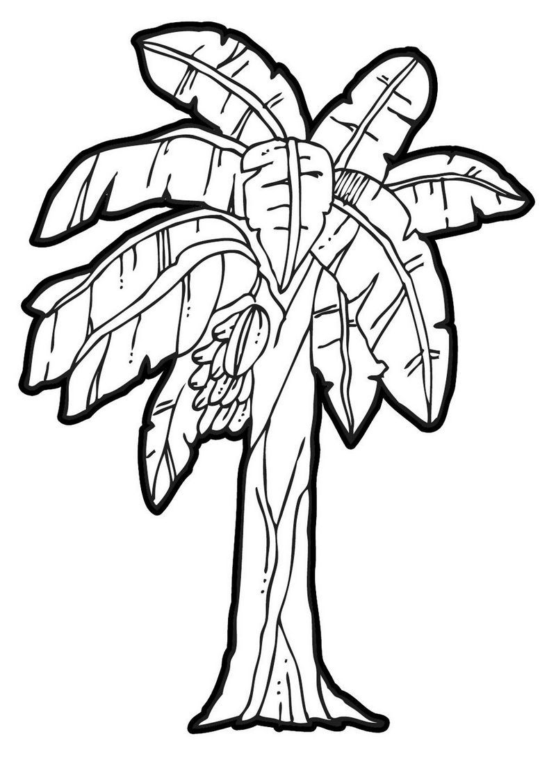 800x1092 Palm Leaves Coloring Pages Banana Leaf Drawing At Getdrawings Com