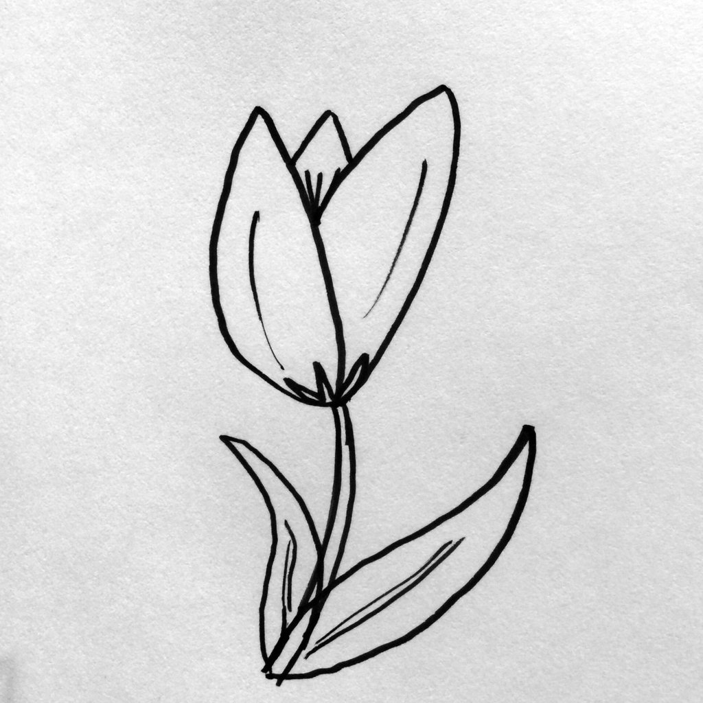 1024x1024 Simple Steps For Drawing Flowers