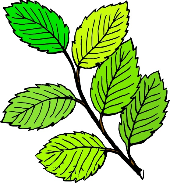 558x600 Summer Leaves Clip Art Free Vector In Open Office Drawing
