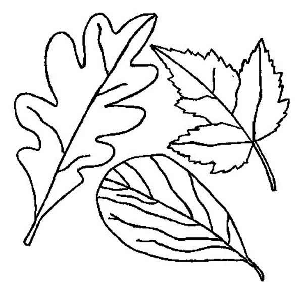 600x593 Autumn, Drawing Of Autumn Leaf Coloring