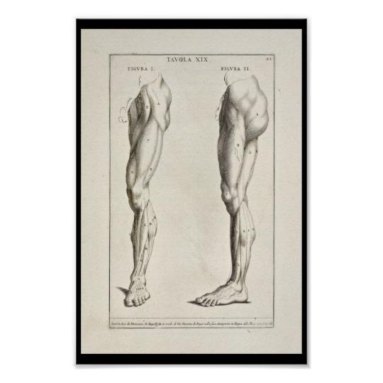 Leg Anatomy Drawing