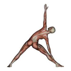 300x300 Trikonasana Key Benefits And Muscle Groups