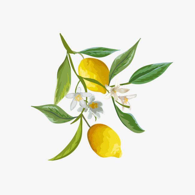 650x651 watercolor lemon, watercolor clipart, lemon clipart, lemon png