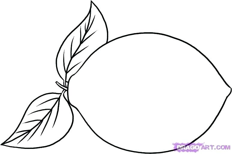 772x512 how do you draw a lemon how to draw a lemon step draw lemon