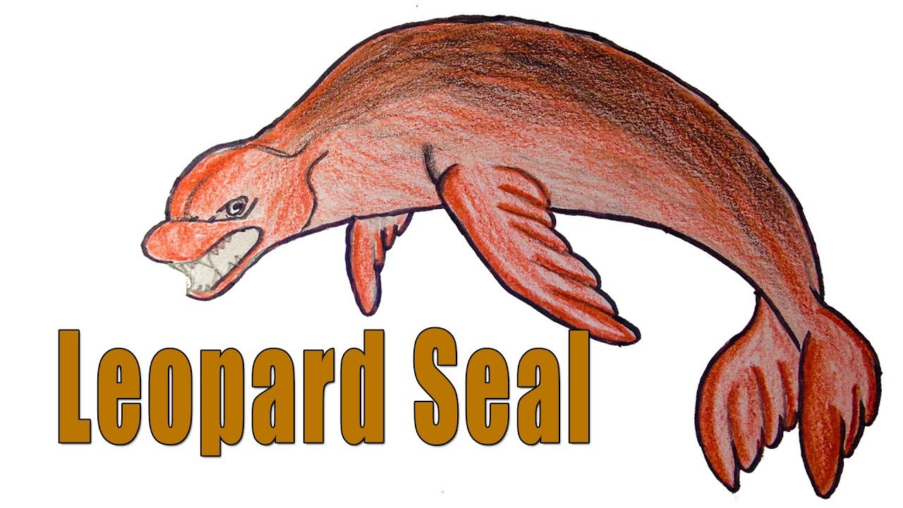 1280x720 How To Draw Leopard Seal